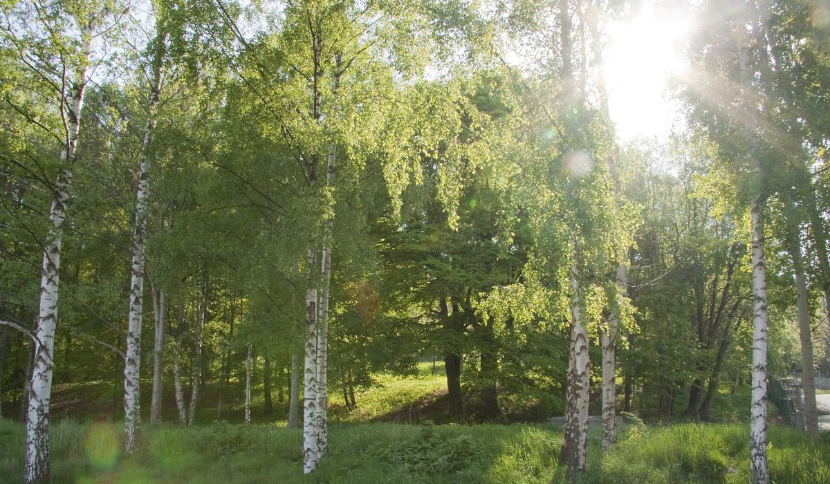krokslatt-natur